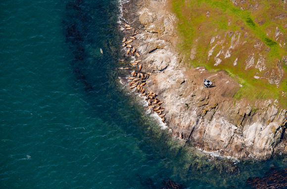 Above the Steller Sea Lions of Spieden Island